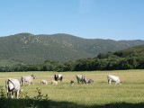 Vorschau Auf dem Weg nach Marina di Alberese (Im Nationalpark)